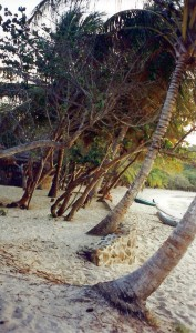Windswept palms on the beach at Mayreau.